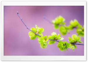Small Green Flowers HD Wide Wallpaper for Widescreen