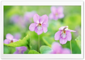 Small Pink Flowers HD Wide Wallpaper for Widescreen
