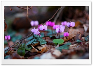 Small Purple Flowers Close Up HD Wide Wallpaper for Widescreen