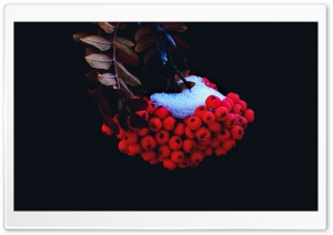 Small Red Berries HD Wide Wallpaper for Widescreen