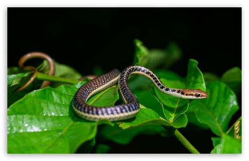 Small Snake UltraHD Wallpaper for Wide 16:10 5:3 Widescreen WHXGA WQXGA WUXGA WXGA WGA ; UltraWide 21:9 24:10 ; 8K UHD TV 16:9 Ultra High Definition 2160p 1440p 1080p 900p 720p ; UHD 16:9 2160p 1440p 1080p 900p 720p ; Standard 4:3 5:4 3:2 Fullscreen UXGA XGA SVGA QSXGA SXGA DVGA HVGA HQVGA ( Apple PowerBook G4 iPhone 4 3G 3GS iPod Touch ) ; Smartphone 16:9 3:2 5:3 2160p 1440p 1080p 900p 720p DVGA HVGA HQVGA ( Apple PowerBook G4 iPhone 4 3G 3GS iPod Touch ) WGA ; Tablet 1:1 ; iPad 1/2/Mini ; Mobile 4:3 5:3 3:2 16:9 5:4 - UXGA XGA SVGA WGA DVGA HVGA HQVGA ( Apple PowerBook G4 iPhone 4 3G 3GS iPod Touch ) 2160p 1440p 1080p 900p 720p QSXGA SXGA ; Dual 16:10 5:3 16:9 4:3 5:4 3:2 WHXGA WQXGA WUXGA WXGA WGA 2160p 1440p 1080p 900p 720p UXGA XGA SVGA QSXGA SXGA DVGA HVGA HQVGA ( Apple PowerBook G4 iPhone 4 3G 3GS iPod Touch ) ; Triple 16:10 5:3 16:9 4:3 5:4 3:2 WHXGA WQXGA WUXGA WXGA WGA 2160p 1440p 1080p 900p 720p UXGA XGA SVGA QSXGA SXGA DVGA HVGA HQVGA ( Apple PowerBook G4 iPhone 4 3G 3GS iPod Touch ) ;