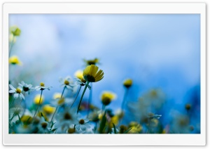 Small Spring Flowers HD Wide Wallpaper for Widescreen