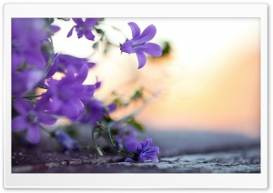 Small Violet Flowers HD Wide Wallpaper for Widescreen