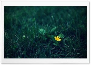 Small Yellow Flower HD Wide Wallpaper for Widescreen