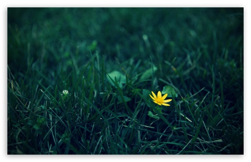 Small Yellow Flower HD wallpaper for Wide 16:10 5:3 Widescreen WHXGA WQXGA WUXGA WXGA WGA ; HD 16:9 High Definition WQHD QWXGA 1080p 900p 720p QHD nHD ; UHD 16:9 WQHD QWXGA 1080p 900p 720p QHD nHD ; Standard 4:3 5:4 3:2 Fullscreen UXGA XGA SVGA QSXGA SXGA DVGA HVGA HQVGA devices ( Apple PowerBook G4 iPhone 4 3G 3GS iPod Touch ) ; Tablet 1:1 ; iPad 1/2/Mini ; Mobile 4:3 5:3 3:2 16:9 5:4 - UXGA XGA SVGA WGA DVGA HVGA HQVGA devices ( Apple PowerBook G4 iPhone 4 3G 3GS iPod Touch ) WQHD QWXGA 1080p 900p 720p QHD nHD QSXGA SXGA ; Dual 16:10 5:3 16:9 4:3 5:4 WHXGA WQXGA WUXGA WXGA WGA WQHD QWXGA 1080p 900p 720p QHD nHD UXGA XGA SVGA QSXGA SXGA ;