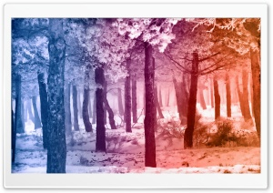 Smooth Rainbow Winter Forest HD Wide Wallpaper for Widescreen