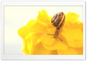 Snail Ultra HD Wallpaper for 4K UHD Widescreen desktop, tablet & smartphone