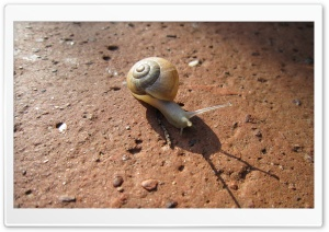 Snail HD Wide Wallpaper for Widescreen