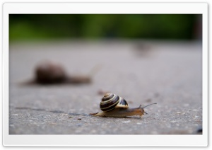 Snail HD Wide Wallpaper for 4K UHD Widescreen desktop & smartphone