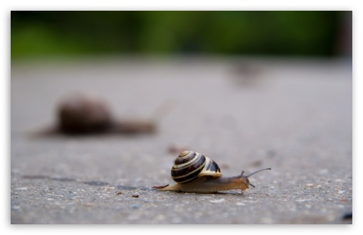 Snail HD wallpaper for Wide 16:10 5:3 Widescreen WHXGA WQXGA WUXGA WXGA WGA ; HD 16:9 High Definition WQHD QWXGA 1080p 900p 720p QHD nHD ; Standard 4:3 5:4 Fullscreen UXGA XGA SVGA QSXGA SXGA ; MS 3:2 DVGA HVGA HQVGA devices ( Apple PowerBook G4 iPhone 4 3G 3GS iPod Touch ) ; Mobile VGA WVGA iPhone iPad PSP Phone - VGA QVGA Smartphone ( PocketPC GPS iPod Zune BlackBerry HTC Samsung LG Nokia Eten Asus ) WVGA WQVGA Smartphone ( HTC Samsung Sony Ericsson LG Vertu MIO ) HVGA Smartphone ( Apple iPhone iPod BlackBerry HTC Samsung Nokia ) Sony PSP Zune HD Zen ; Tablet 1&2 Android ; Dual 4:3 5:4 16:10 5:3 16:9 UXGA XGA SVGA QSXGA SXGA WHXGA WQXGA WUXGA WXGA WGA WQHD QWXGA 1080p 900p 720p QHD nHD ;