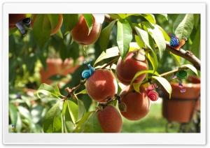 Snail HD Wide Wallpaper for Widescreen