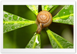 Snail After The Rain HD Wide Wallpaper for Widescreen