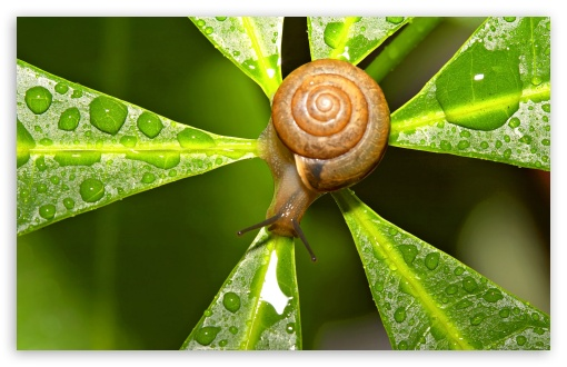Snail After The Rain ❤ 4K UHD Wallpaper for Wide 16:10 5:3 Widescreen WHXGA WQXGA WUXGA WXGA WGA ; 4K UHD 16:9 Ultra High Definition 2160p 1440p 1080p 900p 720p ; Standard 4:3 5:4 3:2 Fullscreen UXGA XGA SVGA QSXGA SXGA DVGA HVGA HQVGA ( Apple PowerBook G4 iPhone 4 3G 3GS iPod Touch ) ; Tablet 1:1 ; iPad 1/2/Mini ; Mobile 4:3 5:3 3:2 16:9 5:4 - UXGA XGA SVGA WGA DVGA HVGA HQVGA ( Apple PowerBook G4 iPhone 4 3G 3GS iPod Touch ) 2160p 1440p 1080p 900p 720p QSXGA SXGA ;