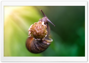 Snail Eating A Flower HD Wide Wallpaper for 4K UHD Widescreen desktop & smartphone