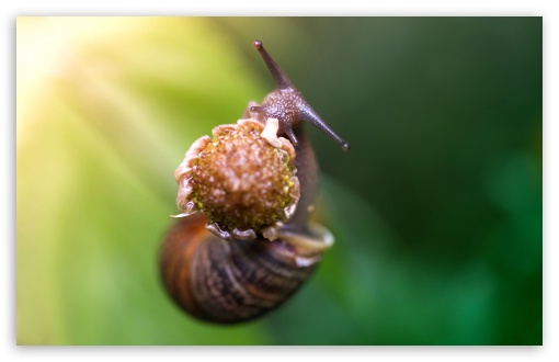 Snail Eating A Flower HD wallpaper for Wide 16:10 5:3 Widescreen WHXGA WQXGA WUXGA WXGA WGA ; HD 16:9 High Definition WQHD QWXGA 1080p 900p 720p QHD nHD ; UHD 16:9 WQHD QWXGA 1080p 900p 720p QHD nHD ; Standard 4:3 5:4 3:2 Fullscreen UXGA XGA SVGA QSXGA SXGA DVGA HVGA HQVGA devices ( Apple PowerBook G4 iPhone 4 3G 3GS iPod Touch ) ; Tablet 1:1 ; iPad 1/2/Mini ; Mobile 4:3 5:3 3:2 16:9 5:4 - UXGA XGA SVGA WGA DVGA HVGA HQVGA devices ( Apple PowerBook G4 iPhone 4 3G 3GS iPod Touch ) WQHD QWXGA 1080p 900p 720p QHD nHD QSXGA SXGA ;