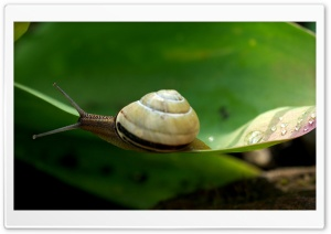 Snail Macro HD Wide Wallpaper for 4K UHD Widescreen desktop & smartphone