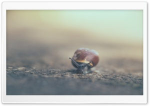 Snail Moving Slowly HD Wide Wallpaper for Widescreen