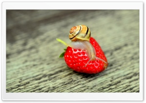 Snail on a Red Strawberry HD Wide Wallpaper for 4K UHD Widescreen desktop & smartphone