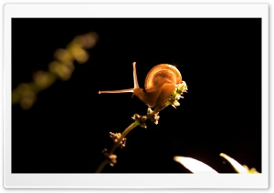 Snail On Branch HD Wide Wallpaper for Widescreen