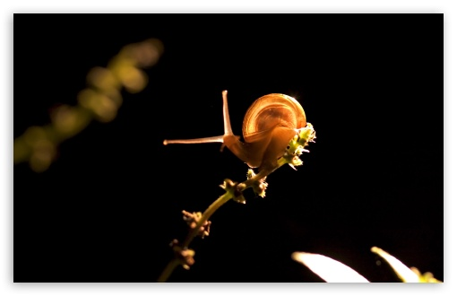 Snail On Branch ❤ 4K UHD Wallpaper for Wide 16:10 5:3 Widescreen WHXGA WQXGA WUXGA WXGA WGA ; 4K UHD 16:9 Ultra High Definition 2160p 1440p 1080p 900p 720p ; Standard 4:3 5:4 3:2 Fullscreen UXGA XGA SVGA QSXGA SXGA DVGA HVGA HQVGA ( Apple PowerBook G4 iPhone 4 3G 3GS iPod Touch ) ; Tablet 1:1 ; iPad 1/2/Mini ; Mobile 4:3 5:3 3:2 16:9 5:4 - UXGA XGA SVGA WGA DVGA HVGA HQVGA ( Apple PowerBook G4 iPhone 4 3G 3GS iPod Touch ) 2160p 1440p 1080p 900p 720p QSXGA SXGA ;