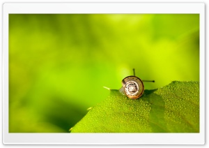 Snail On Leaf HD Wide Wallpaper for 4K UHD Widescreen desktop & smartphone