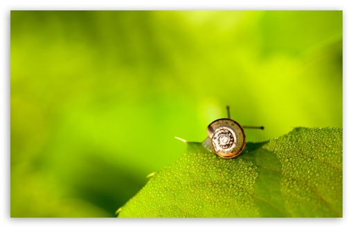 Snail On Leaf HD wallpaper for Wide 16:10 5:3 Widescreen WHXGA WQXGA WUXGA WXGA WGA ; HD 16:9 High Definition WQHD QWXGA 1080p 900p 720p QHD nHD ; Standard 4:3 5:4 3:2 Fullscreen UXGA XGA SVGA QSXGA SXGA DVGA HVGA HQVGA devices ( Apple PowerBook G4 iPhone 4 3G 3GS iPod Touch ) ; Tablet 1:1 ; iPad 1/2/Mini ; Mobile 4:3 5:3 3:2 16:9 5:4 - UXGA XGA SVGA WGA DVGA HVGA HQVGA devices ( Apple PowerBook G4 iPhone 4 3G 3GS iPod Touch ) WQHD QWXGA 1080p 900p 720p QHD nHD QSXGA SXGA ; Dual 16:10 5:3 16:9 4:3 5:4 WHXGA WQXGA WUXGA WXGA WGA WQHD QWXGA 1080p 900p 720p QHD nHD UXGA XGA SVGA QSXGA SXGA ;
