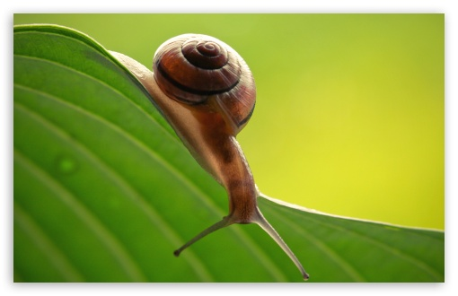 Snail On Leaf ❤ 4K UHD Wallpaper for Wide 16:10 5:3 Widescreen WHXGA WQXGA WUXGA WXGA WGA ; Standard 4:3 5:4 3:2 Fullscreen UXGA XGA SVGA QSXGA SXGA DVGA HVGA HQVGA ( Apple PowerBook G4 iPhone 4 3G 3GS iPod Touch ) ; Tablet 1:1 ; iPad 1/2/Mini ; Mobile 4:3 5:3 3:2 5:4 - UXGA XGA SVGA WGA DVGA HVGA HQVGA ( Apple PowerBook G4 iPhone 4 3G 3GS iPod Touch ) QSXGA SXGA ;