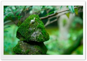 Snail On Stone HD Wide Wallpaper for Widescreen