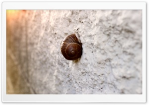 Snail On Wall HD Wide Wallpaper for Widescreen