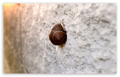 Snail On Wall HD wallpaper for Wide 16:10 5:3 Widescreen WHXGA WQXGA WUXGA WXGA WGA ; HD 16:9 High Definition WQHD QWXGA 1080p 900p 720p QHD nHD ; Standard 4:3 5:4 Fullscreen UXGA XGA SVGA QSXGA SXGA ; MS 3:2 DVGA HVGA HQVGA devices ( Apple PowerBook G4 iPhone 4 3G 3GS iPod Touch ) ; Mobile VGA WVGA iPhone iPad PSP Phone - VGA QVGA Smartphone ( PocketPC GPS iPod Zune BlackBerry HTC Samsung LG Nokia Eten Asus ) WVGA WQVGA Smartphone ( HTC Samsung Sony Ericsson LG Vertu MIO ) HVGA Smartphone ( Apple iPhone iPod BlackBerry HTC Samsung Nokia ) Sony PSP Zune HD Zen ; Tablet 1&2 ;
