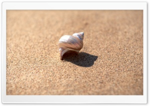Snail Shell HD Wide Wallpaper for Widescreen