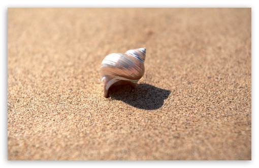 Snail Shell ❤ 4K UHD Wallpaper for Wide 16:10 5:3 Widescreen WHXGA WQXGA WUXGA WXGA WGA ; 4K UHD 16:9 Ultra High Definition 2160p 1440p 1080p 900p 720p ; Standard 4:3 5:4 3:2 Fullscreen UXGA XGA SVGA QSXGA SXGA DVGA HVGA HQVGA ( Apple PowerBook G4 iPhone 4 3G 3GS iPod Touch ) ; Tablet 1:1 ; iPad 1/2/Mini ; Mobile 4:3 5:3 3:2 16:9 5:4 - UXGA XGA SVGA WGA DVGA HVGA HQVGA ( Apple PowerBook G4 iPhone 4 3G 3GS iPod Touch ) 2160p 1440p 1080p 900p 720p QSXGA SXGA ;