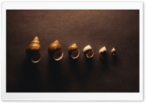 Snail Shells HD Wide Wallpaper for Widescreen