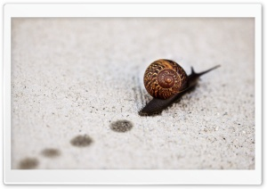 Snail Track Macro HD Wide Wallpaper for Widescreen