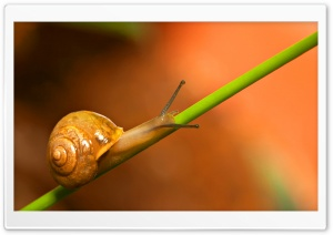 Snail Walking HD Wide Wallpaper for Widescreen