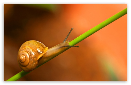 Snail Walking HD wallpaper for Wide 16:10 5:3 Widescreen WHXGA WQXGA WUXGA WXGA WGA ; HD 16:9 High Definition WQHD QWXGA 1080p 900p 720p QHD nHD ; Standard 4:3 5:4 3:2 Fullscreen UXGA XGA SVGA QSXGA SXGA DVGA HVGA HQVGA devices ( Apple PowerBook G4 iPhone 4 3G 3GS iPod Touch ) ; Tablet 1:1 ; iPad 1/2/Mini ; Mobile 4:3 5:3 3:2 16:9 5:4 - UXGA XGA SVGA WGA DVGA HVGA HQVGA devices ( Apple PowerBook G4 iPhone 4 3G 3GS iPod Touch ) WQHD QWXGA 1080p 900p 720p QHD nHD QSXGA SXGA ;