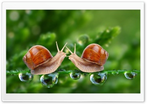 Snails HD Wide Wallpaper for Widescreen