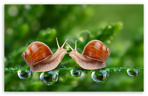 Snails HD wallpaper for Wide 16:10 5:3 Widescreen WHXGA WQXGA WUXGA WXGA WGA ; HD 16:9 High Definition WQHD QWXGA 1080p 900p 720p QHD nHD ; UHD 16:9 WQHD QWXGA 1080p 900p 720p QHD nHD ; Standard 4:3 5:4 3:2 Fullscreen UXGA XGA SVGA QSXGA SXGA DVGA HVGA HQVGA devices ( Apple PowerBook G4 iPhone 4 3G 3GS iPod Touch ) ; Tablet 1:1 ; iPad 1/2/Mini ; Mobile 4:3 5:3 3:2 16:9 5:4 - UXGA XGA SVGA WGA DVGA HVGA HQVGA devices ( Apple PowerBook G4 iPhone 4 3G 3GS iPod Touch ) WQHD QWXGA 1080p 900p 720p QHD nHD QSXGA SXGA ; Dual 16:10 5:3 16:9 4:3 5:4 WHXGA WQXGA WUXGA WXGA WGA WQHD QWXGA 1080p 900p 720p QHD nHD UXGA XGA SVGA QSXGA SXGA ;