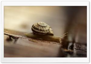 Snails HD Wide Wallpaper for 4K UHD Widescreen desktop & smartphone