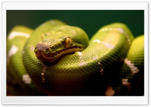Snake HD Wide Wallpaper for Widescreen