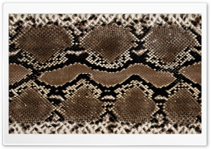 Snake Leather HD Wide Wallpaper for Widescreen