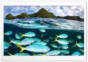 Snorkeling HD Wide Wallpaper for Widescreen
