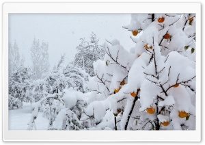 Snow Covered Peach Tree HD Wide Wallpaper for Widescreen