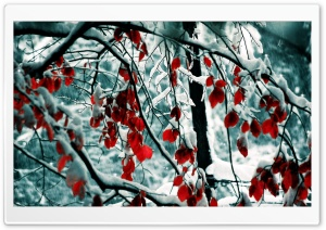 Snow Covered Red Tree HD Wide Wallpaper for 4K UHD Widescreen desktop & smartphone
