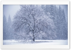 Snow Falling HD Wide Wallpaper for Widescreen