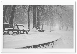 Snow Falling Black and White HD Wide Wallpaper for Widescreen