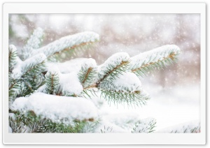 Snow Falling on Pine Trees HD Wide Wallpaper for Widescreen