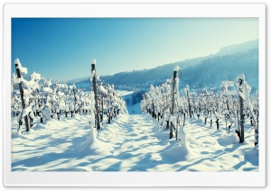 Snow In The Vineyard HD Wide Wallpaper for Widescreen