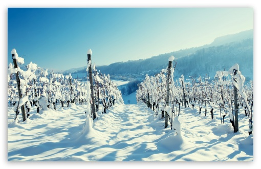 Snow In The Vineyard HD wallpaper for Wide 16:10 5:3 Widescreen WHXGA WQXGA WUXGA WXGA WGA ; HD 16:9 High Definition WQHD QWXGA 1080p 900p 720p QHD nHD ; Standard 4:3 5:4 3:2 Fullscreen UXGA XGA SVGA QSXGA SXGA DVGA HVGA HQVGA devices ( Apple PowerBook G4 iPhone 4 3G 3GS iPod Touch ) ; Tablet 1:1 ; iPad 1/2/Mini ; Mobile 4:3 5:3 3:2 16:9 5:4 - UXGA XGA SVGA WGA DVGA HVGA HQVGA devices ( Apple PowerBook G4 iPhone 4 3G 3GS iPod Touch ) WQHD QWXGA 1080p 900p 720p QHD nHD QSXGA SXGA ; Dual 16:10 5:3 16:9 4:3 5:4 WHXGA WQXGA WUXGA WXGA WGA WQHD QWXGA 1080p 900p 720p QHD nHD UXGA XGA SVGA QSXGA SXGA ;