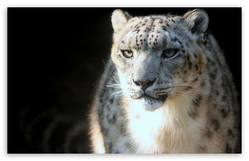 Snow Leopard HD wallpaper for Standard 4:3 5:4 Fullscreen UXGA XGA SVGA QSXGA SXGA ; Wide 16:10 5:3 Widescreen WHXGA WQXGA WUXGA WXGA WGA ; HD 16:9 High Definition WQHD QWXGA 1080p 900p 720p QHD nHD ; Other 3:2 DVGA HVGA HQVGA devices ( Apple PowerBook G4 iPhone 4 3G 3GS iPod Touch ) ; Mobile VGA WVGA iPhone iPad PSP Phone - VGA QVGA Smartphone ( PocketPC GPS iPod Zune BlackBerry HTC Samsung LG Nokia Eten Asus ) WVGA WQVGA Smartphone ( HTC Samsung Sony Ericsson LG Vertu MIO ) HVGA Smartphone ( Apple iPhone iPod BlackBerry HTC Samsung Nokia ) Sony PSP Zune HD Zen ; Tablet 2 Android ;